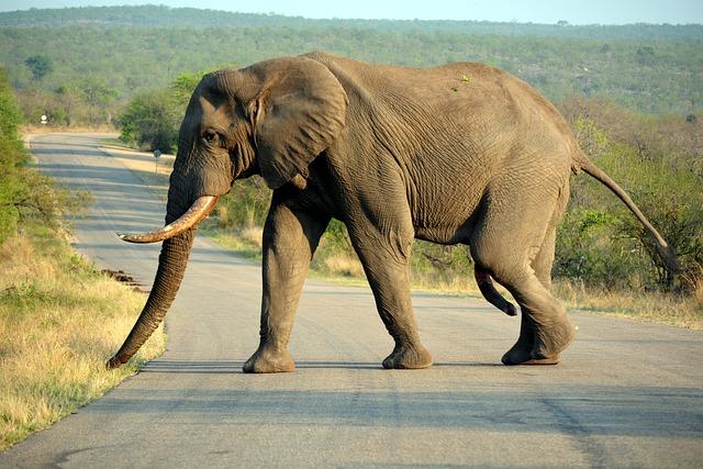 Kruger Park, South Africa, Safari