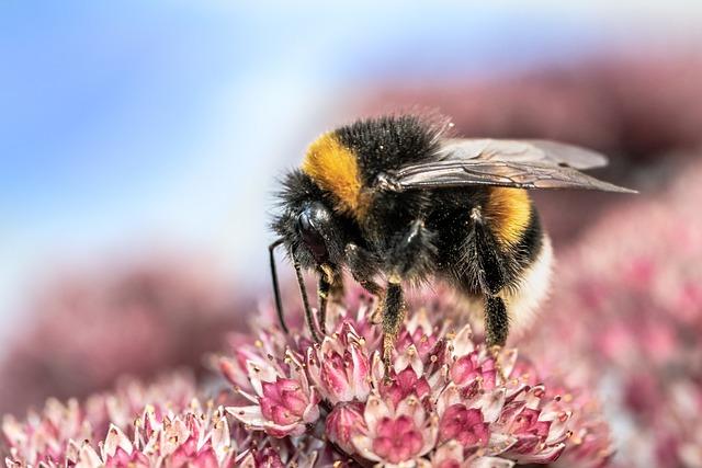 Heath-the Bumble Bee, Kryptarum-the Bumble Bee