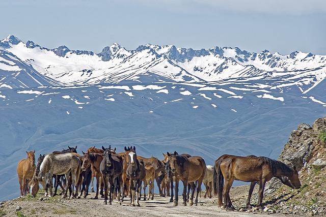 Kyrgyzstan, Horses, Mountains