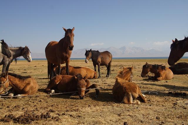 Kyrgyzstan, Song Kul, Landscape, Horse