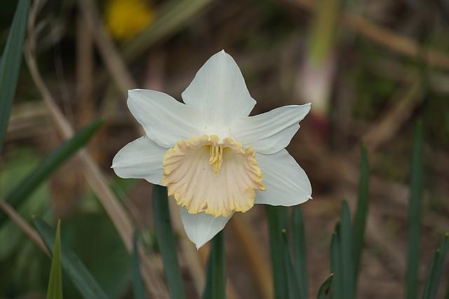Blanc, Fleur, Flore, La Nature