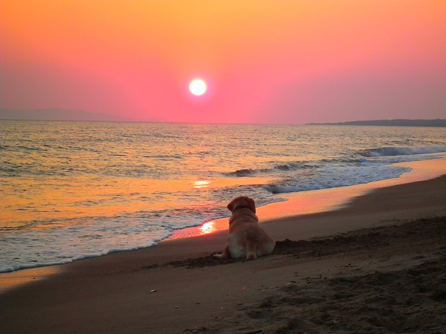 Sunset, Beach, Labrador Colorful