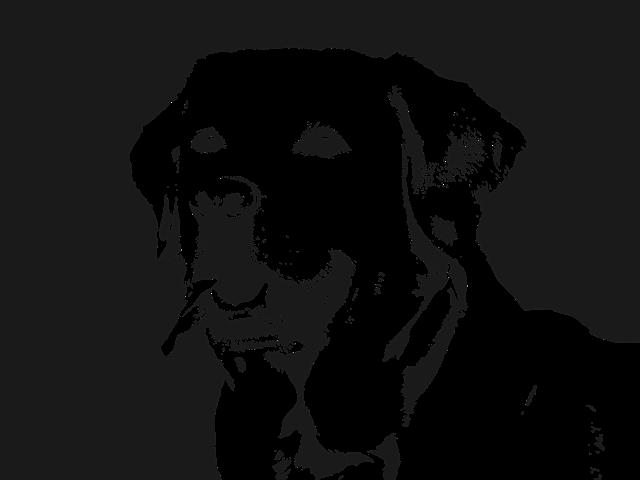 Labrador, Dog, Retriever, Animal, Pet, Happy, Cute