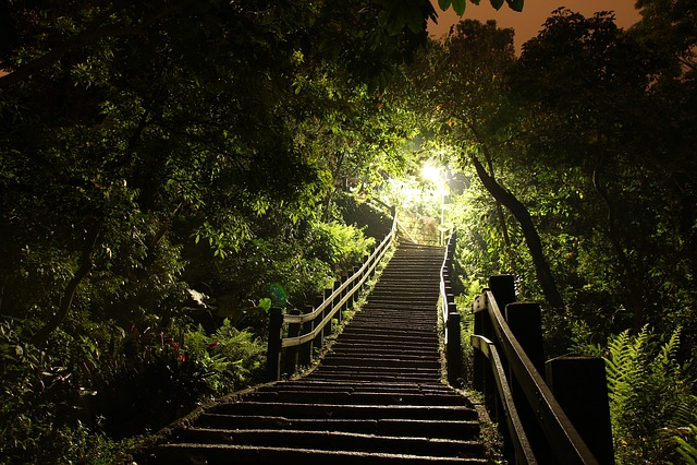 Light, Ladder, Grove