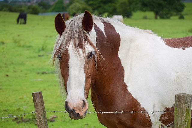 Pinto, Equestrian, Lady, Mane, Meadow, Day, Background
