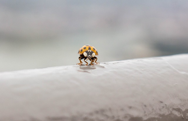 Lady Bug, Fly, Insect, Dots, Outdoors, Wildlife
