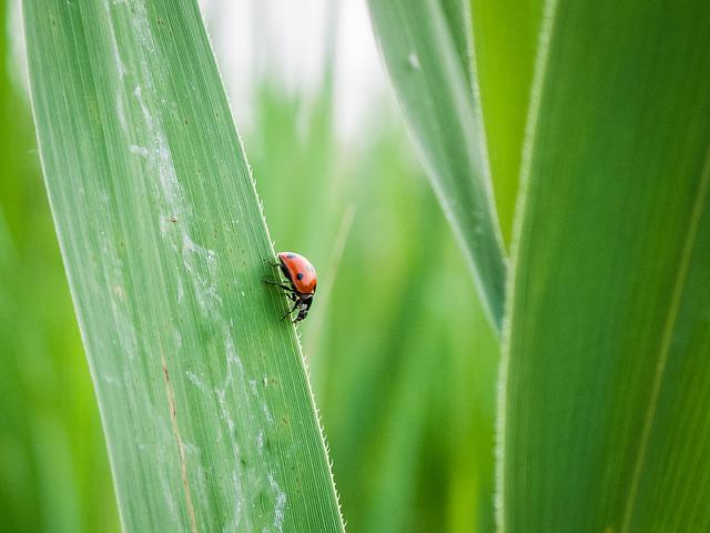 Lady Bug, Grass Leaf, Green, Bug, Grass, Leaf, Nature