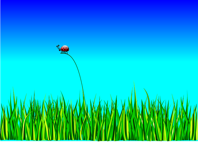 Ladybug, Bug, Grass, Landscape, Sky, Nature, Animal