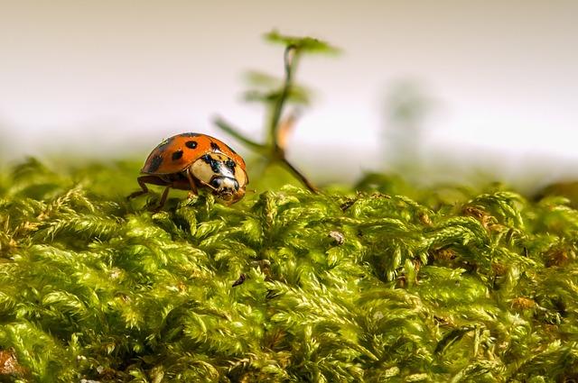 Ladybug, Beetle, Insect, Ladybird, Lucky, Macro