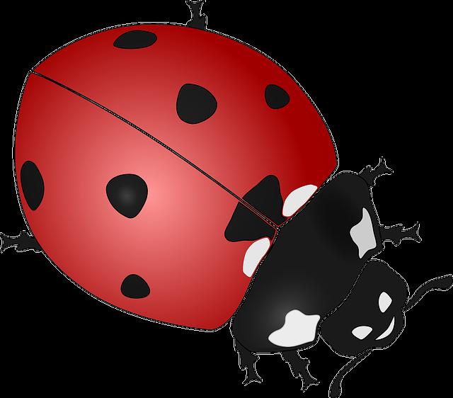 Ladybug, Insect, Beetles, Coccinellidae, Ladybirds, Red