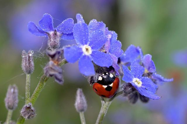 Ladybug, Nots, Blue, Red, Insect, The Delicacy, Garden