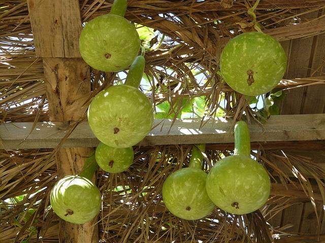 White Gourds, Lagenaria Siceraria, Crop, Vegetables