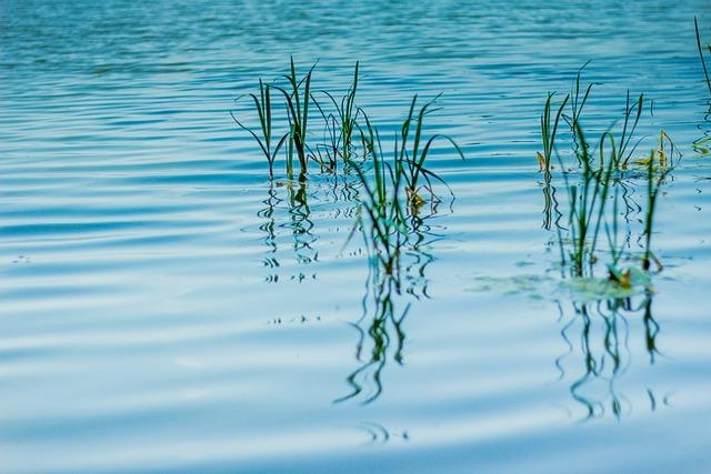 Ticks, Water, Lagoon, Lake, Nature, Pond, Sea