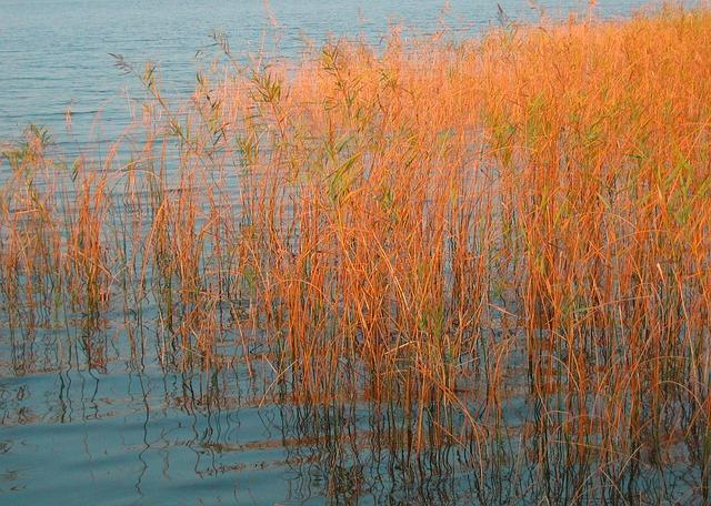 Sea Grass, Lake, Abendstimmung, Bank