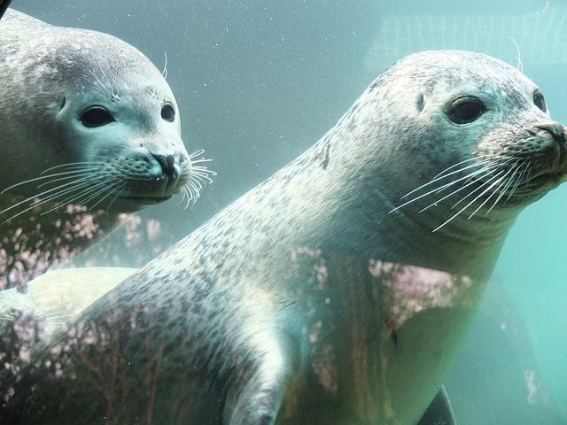 Seal, Robbe, Lake, Sea Lion, Aquarium, Water
