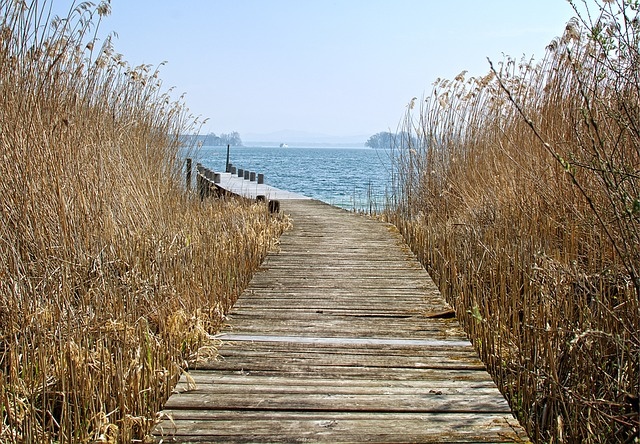 Web, Reed, Nature, Water, Boardwalk, Waters, Lake, Bank