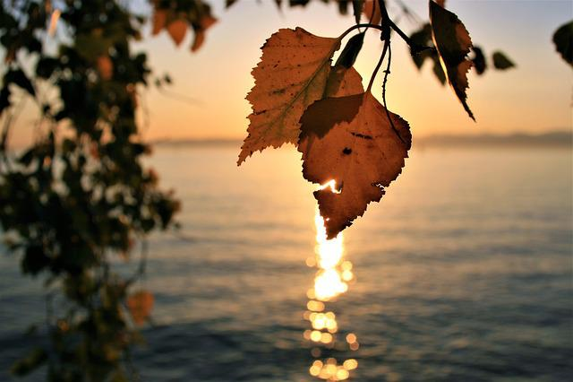 Sunrise, Para, Autumn, Foliage, Lake, Bodensee, Orange