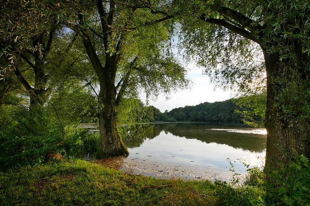 Tree, Nature, Landscape, Waters, Lake, Booked, Bank