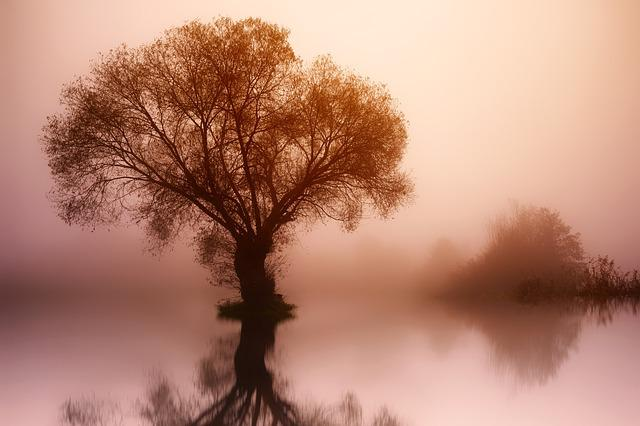 Tree, Nature, Dawn, Landscape, Fog, Water, Lake