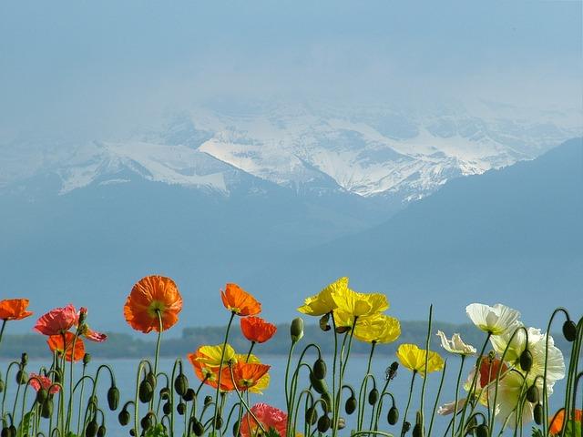 Switzerland, Lake Geneva, Poppies, Massif, Snow, Red
