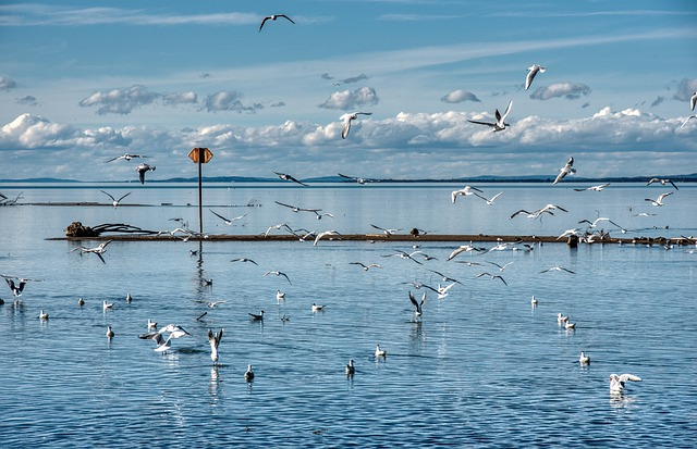 Birds, Gulls, Fly, Water, Bank, Lake, Waters, Flying