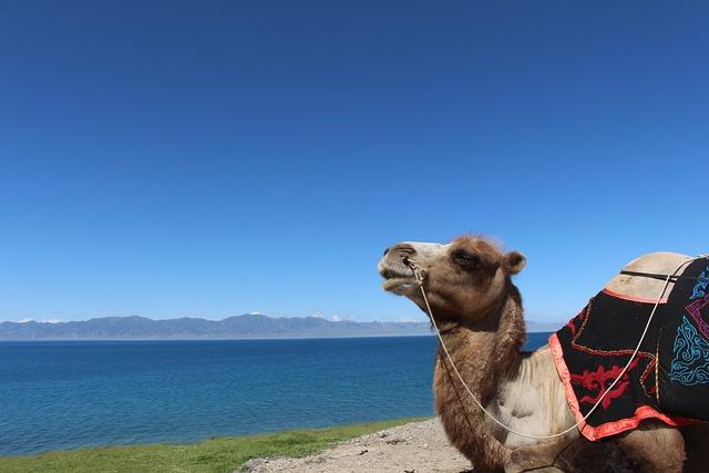 Lake, Camel, The Scenery, In Xinjiang