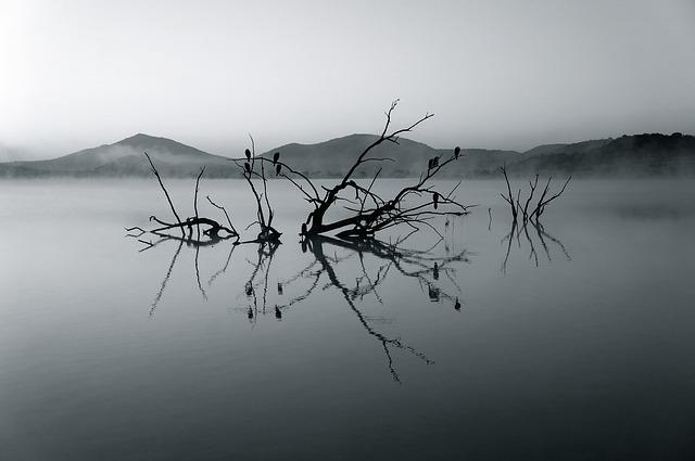 Lake, Branches, Silhouettes, Mountains, Fog, Haze, Mist