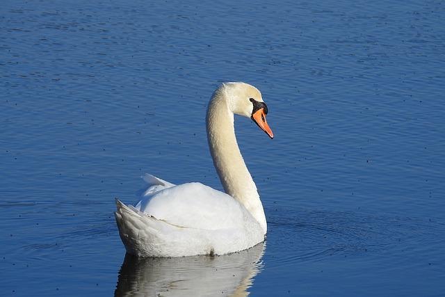 Birds, Lake, Nature