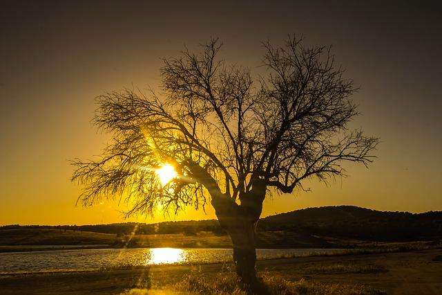 Sunset, Tree, Lake, Portugal