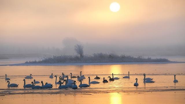 Waters, Sunset, Lake, Silhouette, Dusk, Sun, Evening