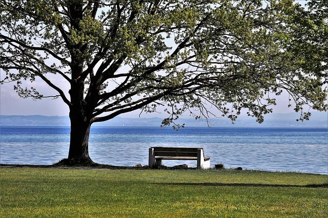 Spring, Landscape, Beach, Lake, Park, Spacer, Tree, To