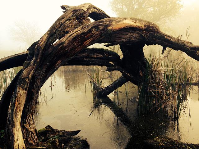 Marsh, Tribe, Lake, Bark, Tree, Nature, Wood, Mood, Fog