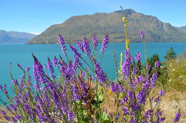 Lake Wanaka, New Zealand, Lake, Nature, Landscape