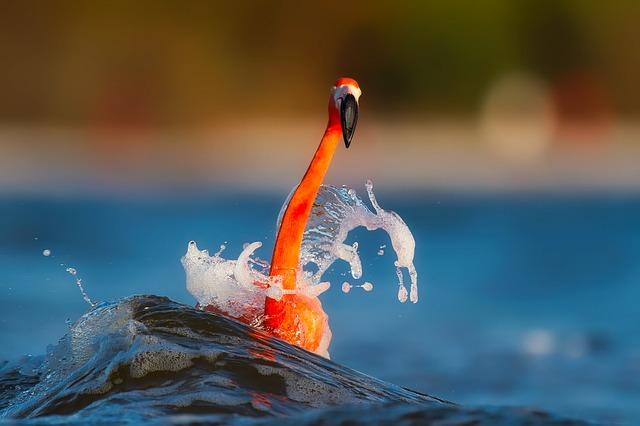 Flamingo, Splash, Lake, Water, Macro, Closeup, Colorful
