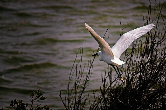 Bird, Waters, Nature, Lake, Wildlife, Swamp, Outdoor