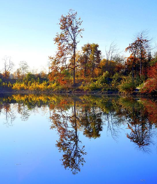 Autumn, Tree, Lake, Waters