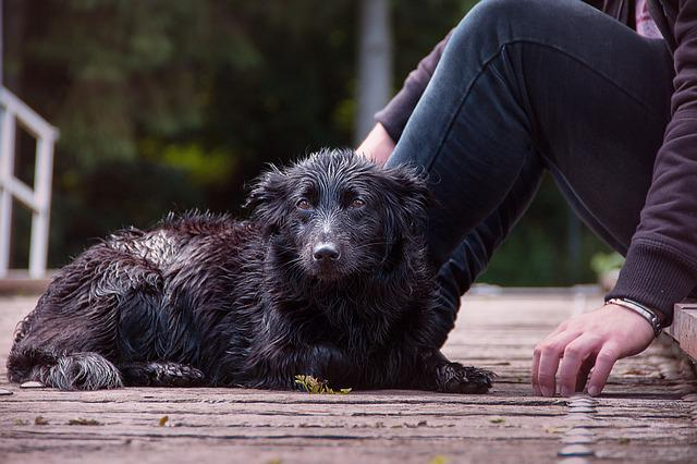 Wet Dog, Dog, Wet, Water, Pet, Animal, Lake, Wet Fur