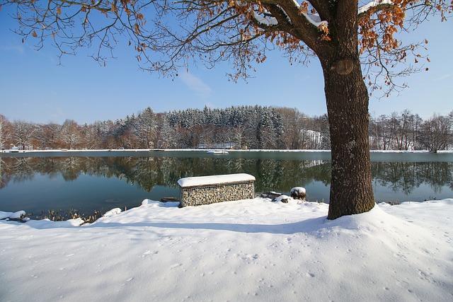 Snow, Winter, Cold, Tree, Frozen, Ice, Lake