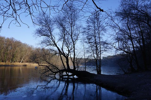 Tree, Nature, Landscape, Wood, Waters, Lake, Winter