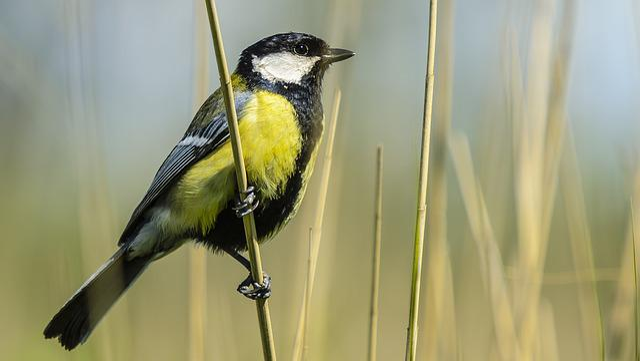 Bird, Yellow, Lake, Tube