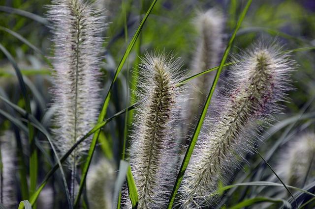 Grasses, Lamp Cleaning Er Grass