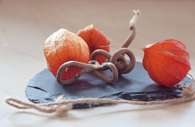 Physalis, Lampionblume, Andes Berry