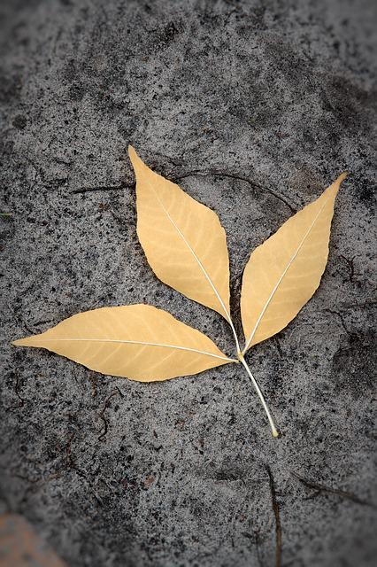 Land, Sheet, Yellow, Closeup, Leaves, Dry Leaves, Plant
