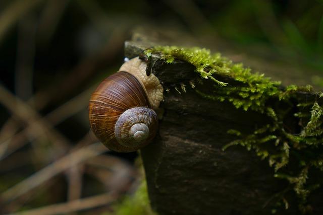 Helix Pomatia, Snail, Swabian Oyster, Land Snail