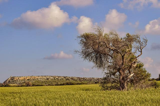 Nature, Field, Landscape, Sky, Agriculture, Tree, Rural