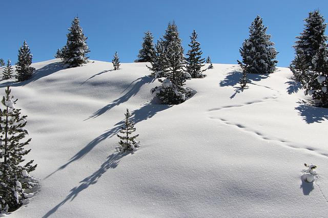 Snow, Mountain, Alpine, Landscape, Trees, Powder Snow
