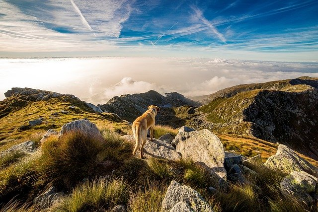 Dog, Mountain, Mombarone, Clouds, Landscape, Andrate