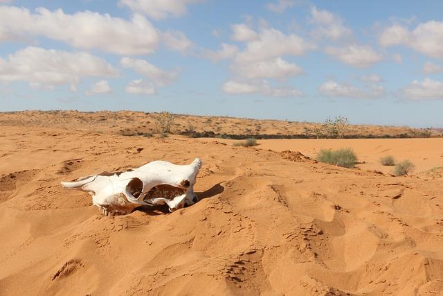 Desert, Africa, Travel, Sahara, Landscape, Arabic