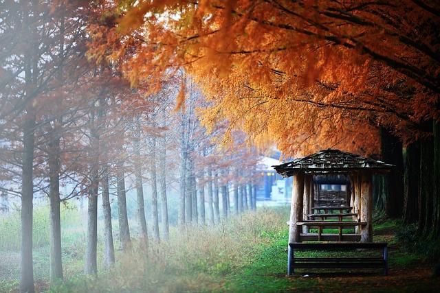 Damyang, Autumn, Booth, Landscape, Hope