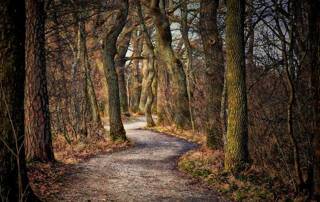 Tree, Path, Forest, Nature, Landscape, Park, Autumn